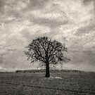 Stood Proud by JFPhotography
