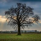 Standing proud in the morning rays by JFPhotography