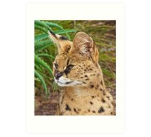 Serval Watcher Art Print