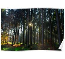 Deep in the forests there´s a light Poster