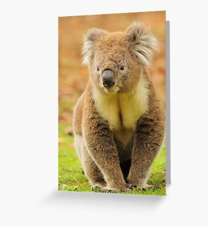 Out For A Walk Greeting Card