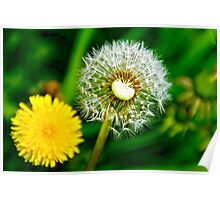 Spring and dandelion Poster