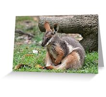 Yellow Footed Rock Wallaby Greeting Card