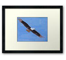 'African Fish Eagle' by Luke Becker (2016) Framed Print