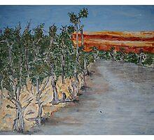 Australian River Bend Landscape with Gum trees Photographic Print