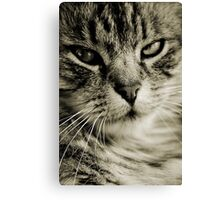 LE CHAT II Canvas Print