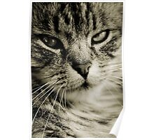 LE CHAT II Poster