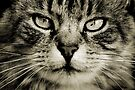 LE CHAT III by Leny .