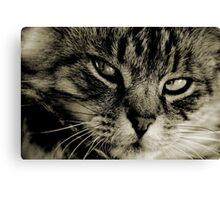 LE CHAT I Canvas Print