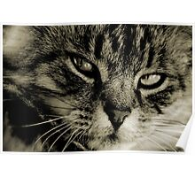 LE CHAT I Poster