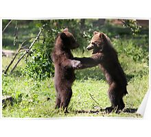 Twin Baby Bears Poster