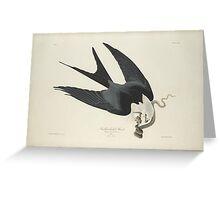John James Audubon (Jean-Jacques Audubon)  SWALLOW-TAILED HAWK, FROM THE BIRDS OF AMERICA, Greeting Card
