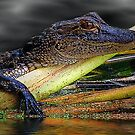 Reptiles by glink