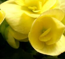 Yellow Begonia Sticker