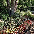 Winery Garden 12 by vigor