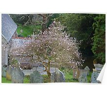 Soft Magnolia blooms compliment the Gravestones... Poster