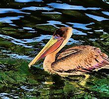 Artsy Pelican by AuntDot