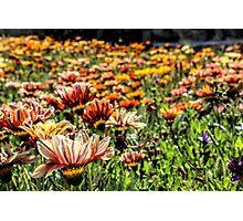 Field of Flowers II Photographic Print