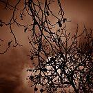 Stormy skies  by Sue Hays