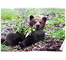 Baby Bear Poster