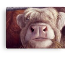 Shaggy Cow Canvas Print