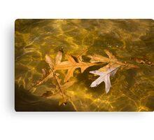 Liquid Gold Fall - Oak Leafs Floating in a Fountain Canvas Print