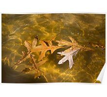 Liquid Gold Fall - Oak Leafs Floating in a Fountain Poster