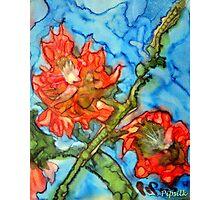 jacqui's flower Photographic Print