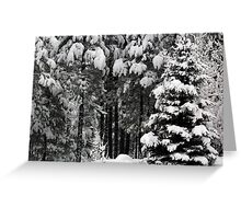 The White Forest Greeting Card