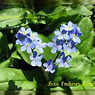 My Heart Will Go On  - Bereavement Card with Forget-me-nots by BlueMoonRose