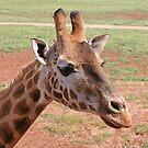 Gentle Giraffe by Jenny Brice