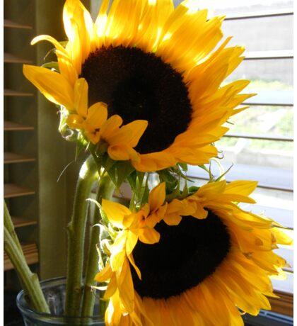 Sunflowers in the kitchen window...... Sticker