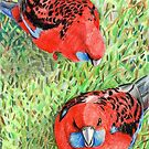 Crimson Rosellas by Aakheperure