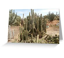 Cactus spike Greeting Card