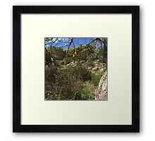 Outback flora Framed Print