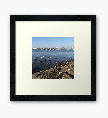 City Birds Framed Print