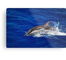 A wild free dolphin jumping  Metal Print