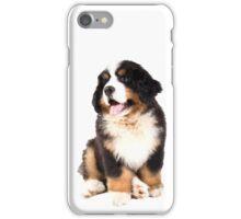 bernese mountain dog puppy iPhone Case/Skin