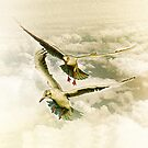 Two gulls by flashcompact