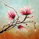 Pink flowers by BlancaJP