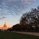 Soft Orange Glow - US Capitol and the National Mall at Sunset by Georgia Mizuleva