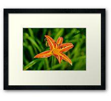 Single flower in the rain Framed Print