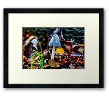 Wonderful Fungi Framed Print