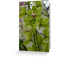Green orchid Greeting Card