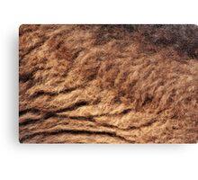 Bison Fur Canvas Print