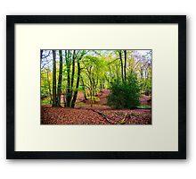 Woodland wonderland Framed Print