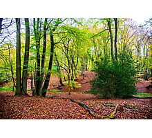 Woodland wonderland Photographic Print