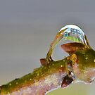 My House in a  Water Droplet [ rotated 180 deg ] by relayer51