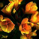 Luminous ! by Elfriede Fulda