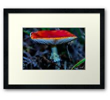 Beautiful Fungi Framed Print